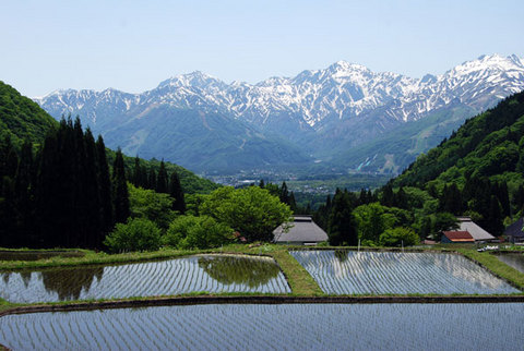 201004271150460aoni_spring2.jpg