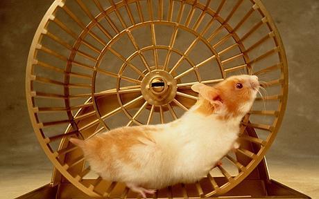 hamster_1240313c.jpg